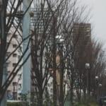 木と街と冬ひとり暮らし