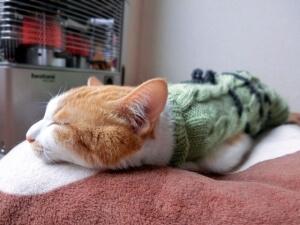 ストーブ前で寝転ぶ猫