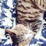 高円寺猫の家くつろぐ猫