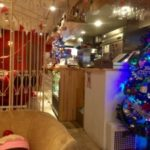 ALL C'S CAFE青いクリスマスツリー店内