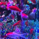 ブログ インスタ ツイッター アップ 金魚