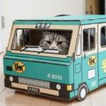 猫とクロネコヤマト