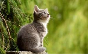 ブログ ペット 飼育 猫 賃貸