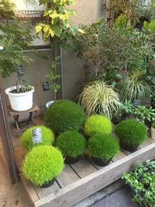 高円寺 お花屋さん 植物