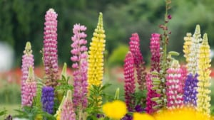 ピンクと黄色と赤の花