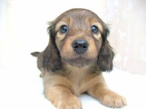 ペット 子犬
