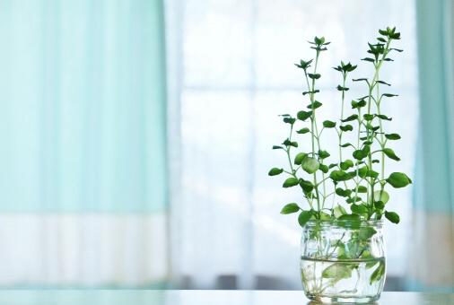 緑の観葉植物と青いカーテン