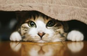 ブログ 猫 ペット