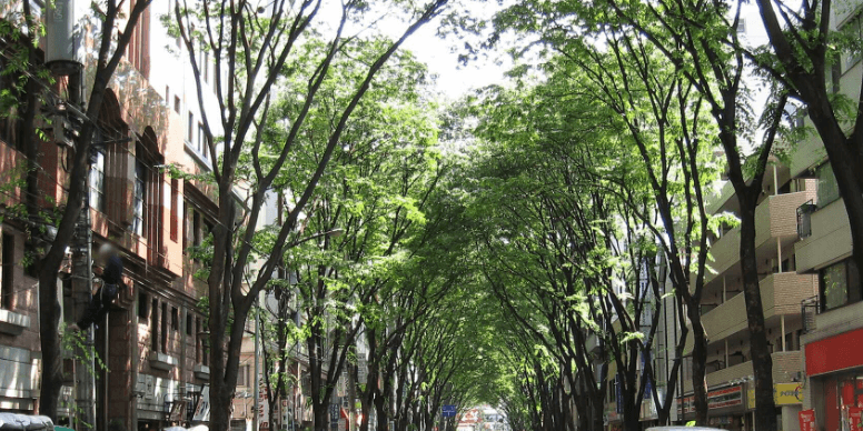 阿佐ヶ谷中杉通りの緑